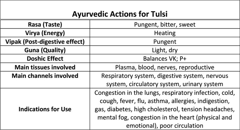 tulsi tea  health benefits